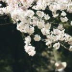【漫画・鬼滅の刃】11巻93話のネタバレ・感想!宇随と善逸が復活して妓夫太郎を倒す!?