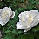 【鬼滅の刃】冨岡義勇の誕生日はいつ?誕生花に隠れた炭治郎への愛が素敵!