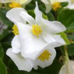 【鬼滅の刃】不死川実弥の誕生日&誕生花には温かい家族愛が込められてる。